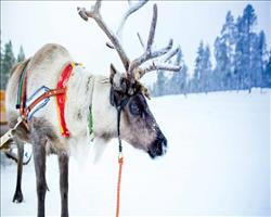 Lapland Activity Week Yllas
